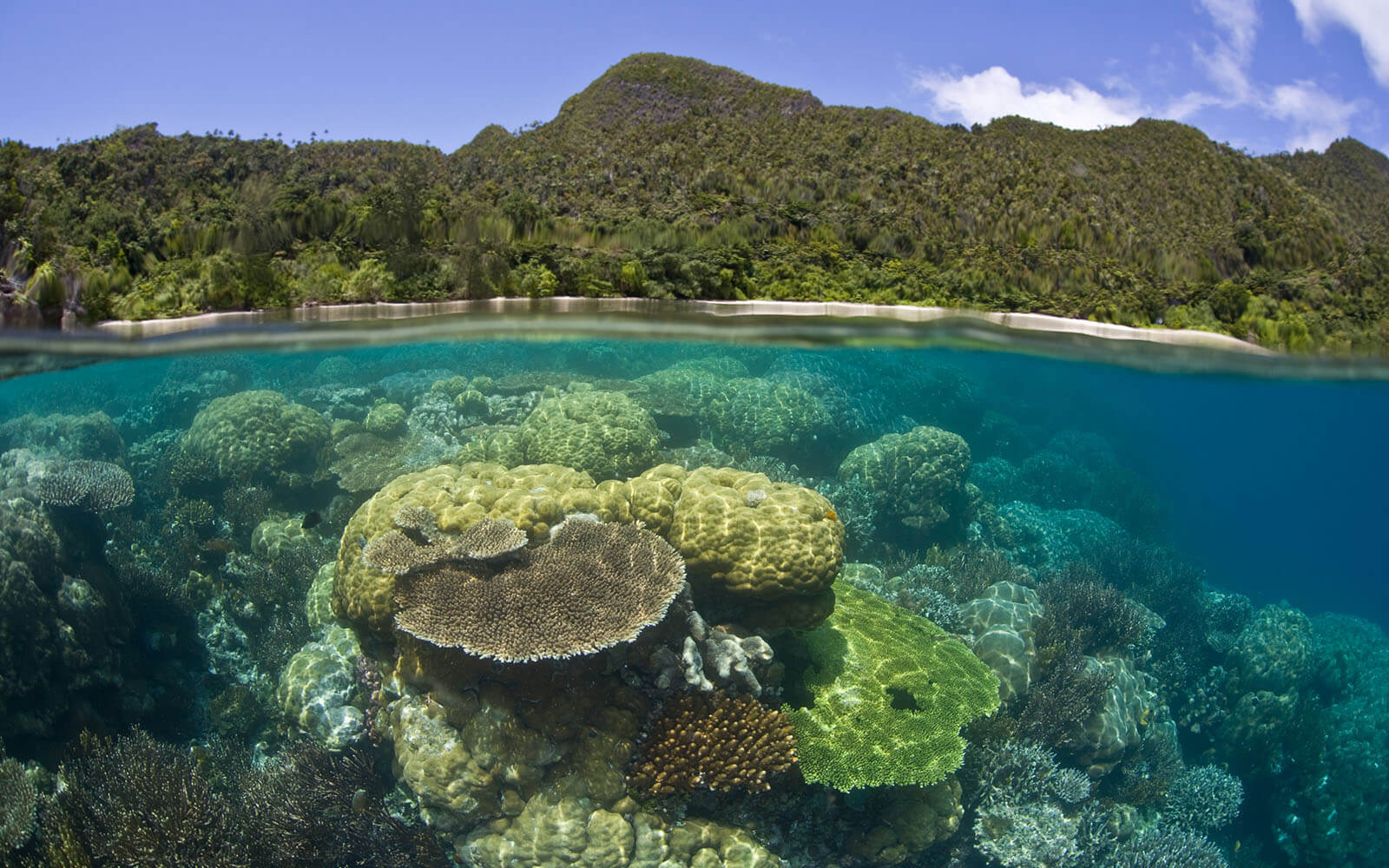 bright corals in shallow water in Wayag