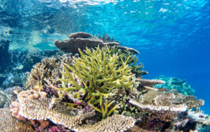 Colorful coral reef photographed by Snorkel Vacations on a snorkeling trip to Raja Ampat