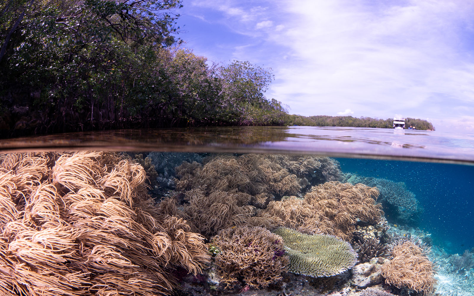 soft corals and mangroves photographed by Snorkel Vacations on a snorkeling trip to Raja Ampat